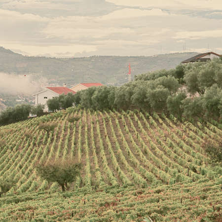 extensive: Extensive Vineyards on the Hills of Portugal, Retro Image Filtered Style