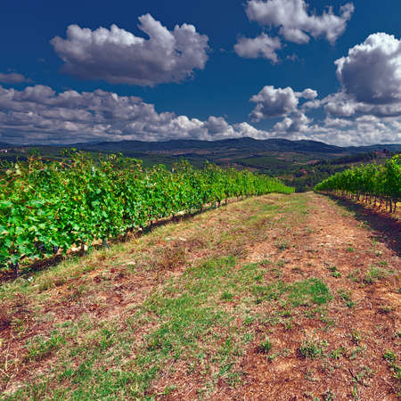 plowing: Hill of Tuscany with Vineyard in the Chianti Region, Vintage Style Toned Picture