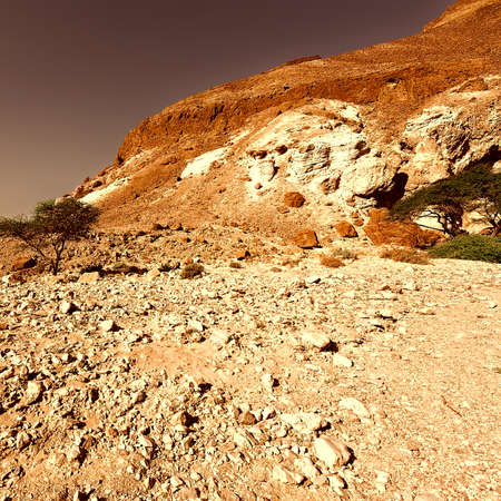 Canyon in the Judean Desert on the West Bank of the Jordan River at Sunset, Vintage Style Toned Picture