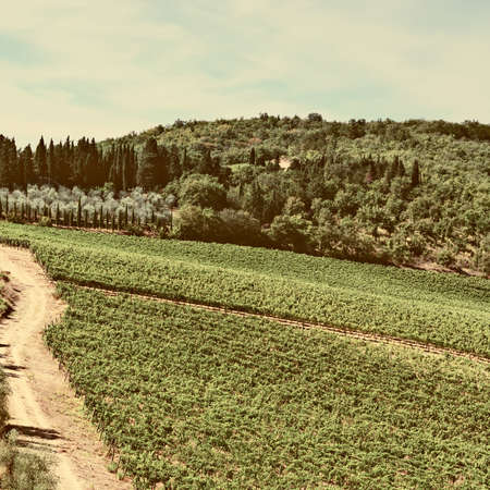 olive groves: Tuscan Landscape with Vineyards and Olive Groves, Vintage Style Toned Picture Stock Photo