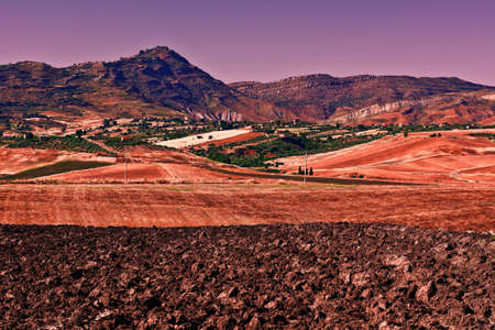 olive groves: Olive Groves and Plowed Sloping Hills of Sicily in Spring at Sunset Stock Photo