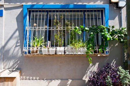 tel: Window Decorated with Flower in Tel Aviv Stock Photo