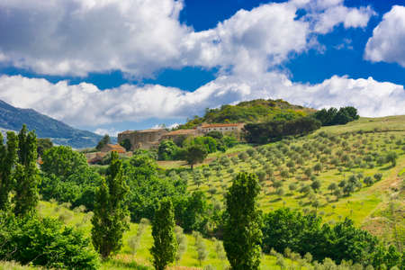 olive groves: Olive Groves on the Sloping Hills of Sicily in Italy