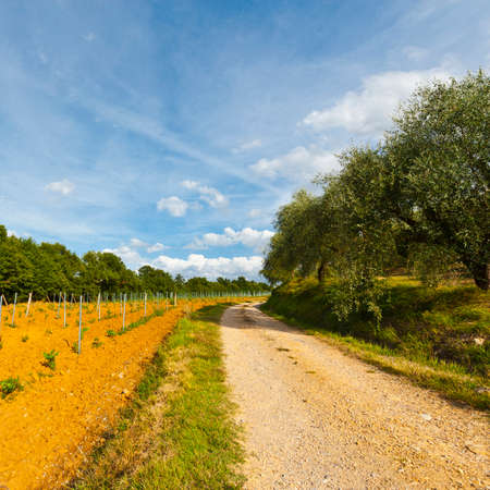 Landweg tussen wijngaarden en olijfbomen in Italië