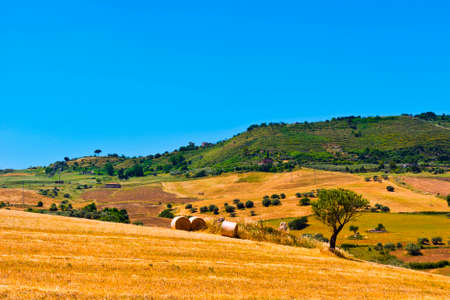 olive groves: Harvested Wheat Field and Olive Groves on the Hills in Sicily
