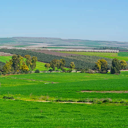 Jezreel Valley at the Foot of the Mount Tabor in Israel Stock Photo