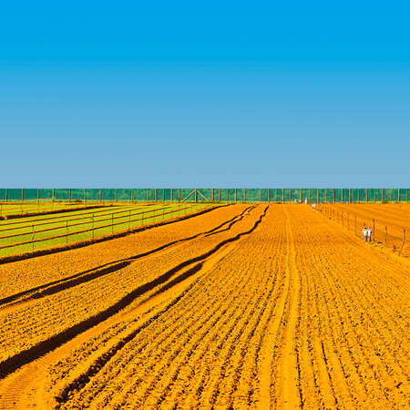 Rows of Fresh Young Green Seedling in Portugal