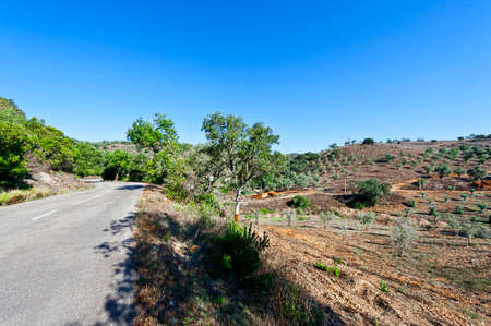 olive groves: Asphalt Road between Hills Covered with Olive Groves in Portugal Stock Photo