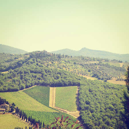 olive groves: Tuscan Landscape with Vineyards and Olive Groves Stock Photo