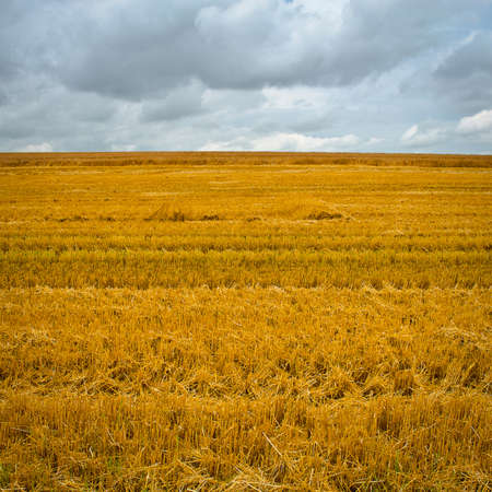 Wheat Field after Harvest in Bavaria, Stock Photo