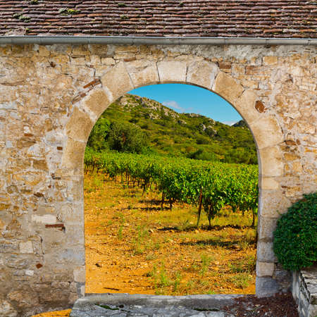 View of Vineyard through the Gate,