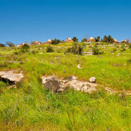 Israel Settlement on the Green Hilltop