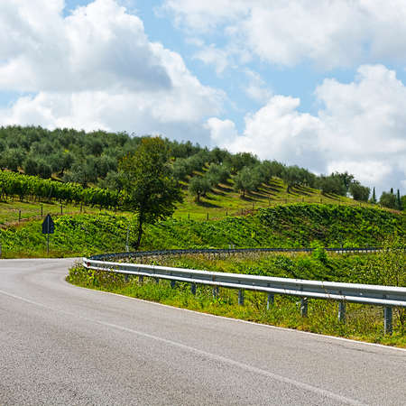 olive groves: Road Surrounded by Vineyards and Olive Groves