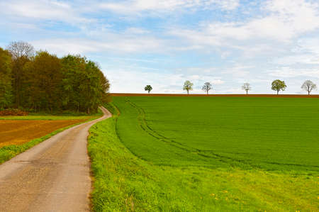 siembra: Country road between spring fields with green grass in Belgium. Belgian landscape with meadow and pasture