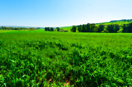 breadbasket: Jezreel Valley at the Foot of the Mount Tabor in Israel, Stylized Photo