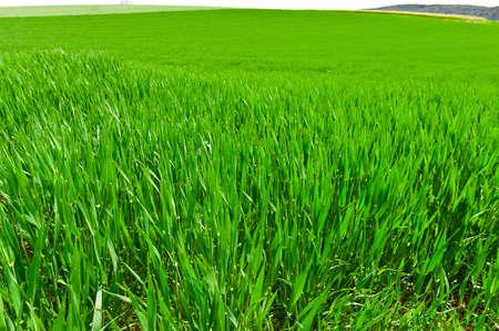 Green Pastures in Switzerland Stock Photo