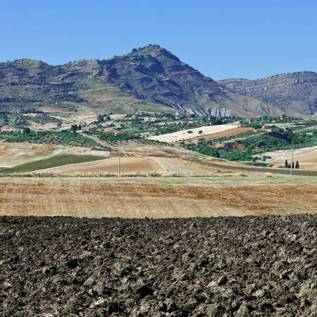 Olive Groves and Plowed Sloping Hills of Sicily in Spring