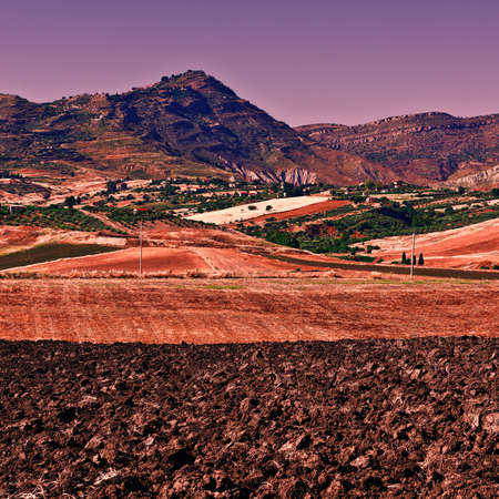Olive Groves and Plowed Sloping Hills of Sicily in Spring at Sunset Stock Photo
