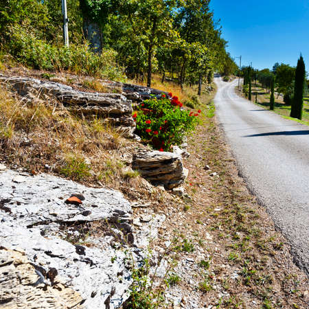 Olive trees on the Tuscany hills with vineyards in Italy. Entrance to a country road decorated with flowers in Tuscany