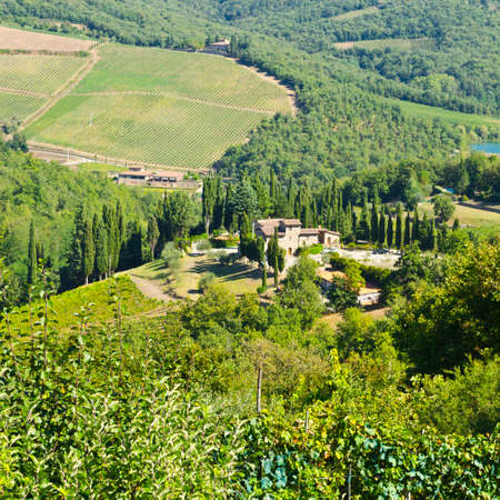 homesteads: Tuscan landscape with vineyards. Italian medieval Homesteads  and countryside landscape with grape fields.