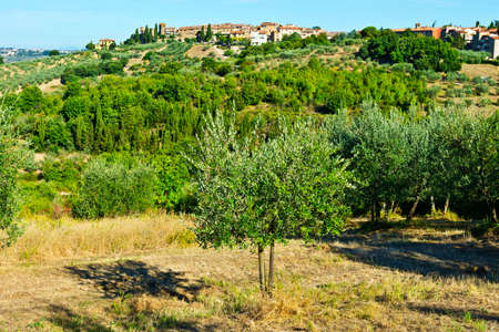 Tuscan landscape with olive groves. Italian medieval town skyline and countryside landscape with olive trees.