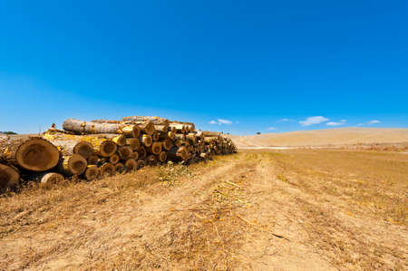 Logging on the plowed fields in Italy. Firewood on the stubble fields of Tuscany after harvest.
