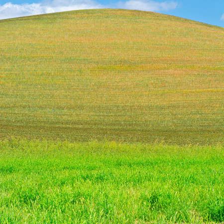 Wheat Fields on the Hill of Sicily Stock Photo