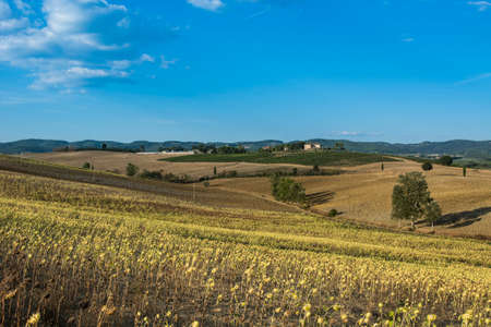 Sunflower plantation in Tuscany. Ripe sunflowers in the field with the heads bowed down in autumn. Reklamní fotografie