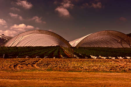 Strawberry Beds inside the Greenhouse in Portugal at Sunset Stock Photo