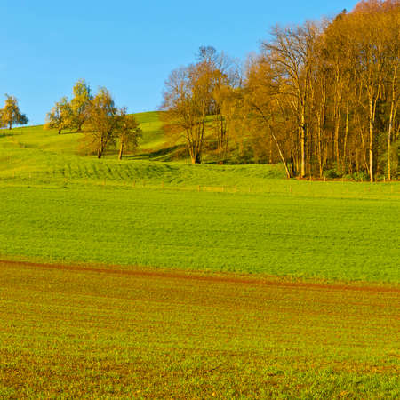 Swiss landscape with  forests and meadow early in the morning. Agriculture in Switzerland, arable land and pastures. Stock Photo