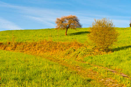 Swiss landscape with meadow and tree early in the morning. Agriculture in Switzerland, path between pastures.