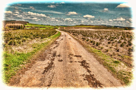 Old Asphalt Road between Green Fields in Belgium. Young Trees in the Nursery for Growing Spruce for Christmas. Vintage Style Toned Picture Stock Photo