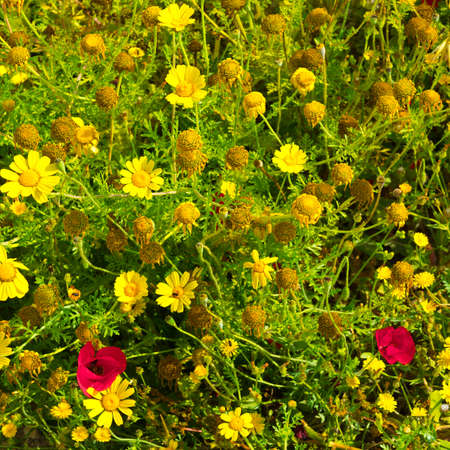 Spring flowers in the Apollonia national park in Israel