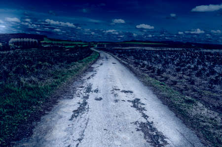 Old Asphalt Road between Green Fields in Belgium at Night. Young Trees in the Nursery for Growing Spruce for Christmas.
