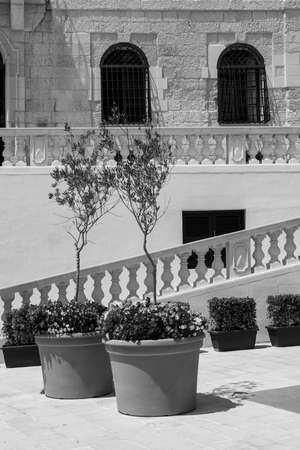 The Cathedral of the Assumption is a Roman Catholic cathedral in the Cittadella of Victoria in Gozo, Malta. Fresh flowers and olive trees decorating the staircase in front of the church. Black and white picture