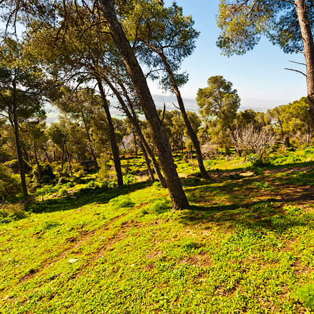 Forest on the Mount Tabor in Israel