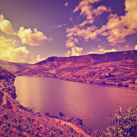 Vineyards in the Valley of the River Douro, Portugal, at Sunset