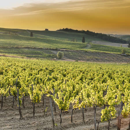 Italian wine farm surrounded with vineyards at sunset. Tuscany is home to some of the worlds most notable wine regions