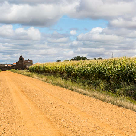 Autumn fields in Spain before harvesting. Service dirt road for agricultural production. Old Spanish church on the edge of the cornfield