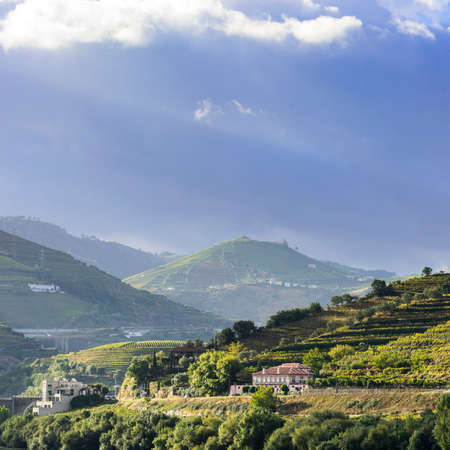Vineyards of the River Douro region in Portugal. Viticulture in the Portuguese village Stock Photo