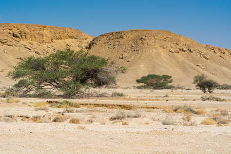 Life in a lifeless infinity of the Negev Desert in Israel. Breathtaking landscape and nature of the Middle East.