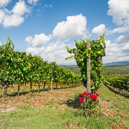 Italian wine farm surrounded with vineyards and olive trees. Stock Photo