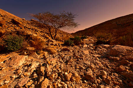 Rocky hills of the Negev Desert in Israel at Sunset. Wind carved rock formations in the Southern Israel Desert.