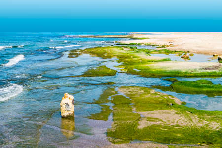 Israeli shore of the Mediterranean Sea. Coastal cliffs covered with algae in Israel