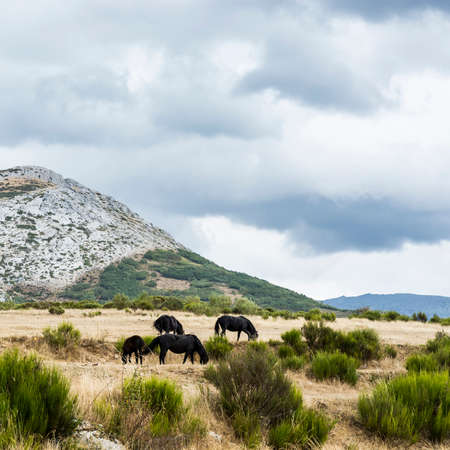 Beautiful landscape in Spain with dramatic view of Cantabrian Mountains. Horses Grazing on a Meadow of the European Peaks