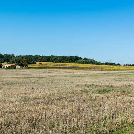 Wilted sunflower fields and poor farmhouse on the arable land after harvesting in France Stockfoto
