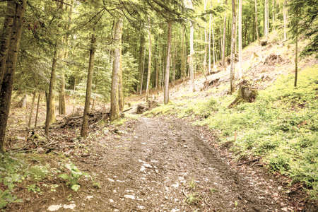 Footpath in dense forest in the austrian alps, rainy day. Vintage style
