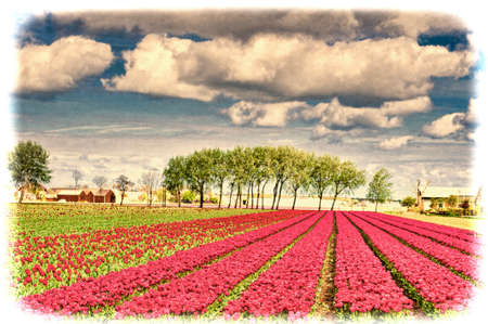 Fields of blooming tulip flowers in Nethrlands. Greenhouses for growing tulip in Holland. Vintage style toned picture