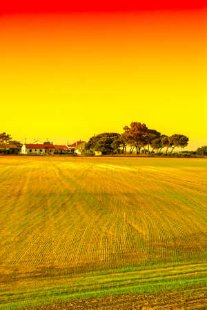 Rows of fresh young seedling in Portugal on the background of farm houses at sunrise.