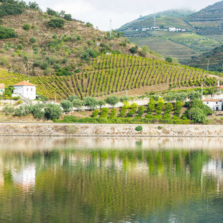 Vineyards of the River Douro region in Portugal. Sights of the Portuguese countryside Stock Photo